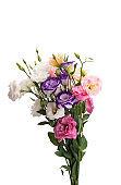 flowers eustoma isolated
