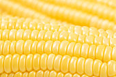 close up of fresh corn background
