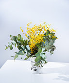 a spring bouquet with yellow mimosa flowers and eucalyptus branches stands on white table. concept of 8 March, happy women's day