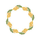 Watercolor wreath of yellow mimosa twigs. Place for text. Spring greenery, flower framing, wedding design, easter.