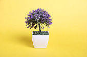 Small artificial plant photography on yellow  background.