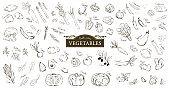 Hand drawn sketch illustration of vegetables.