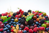 Gooseberries, blueberries, mulberry, raspberries, white and red currants isolated