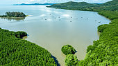 Aerial view mangrove jungles in Thailand, River in tropical mangrove green tree forest view from above, trees, river. Mangrove landscape, Ecosystem and healthy environment concept and background, Asia