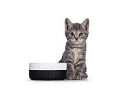 Cat with food bowl on white background
