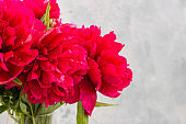 Vase with beautiful magenta peonies flowers on table against light grey concrete wall. Copy space for your text.