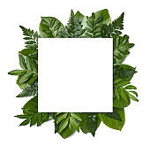 leaf flower greeting card note paper frame background flat lay floral layout invitation nature spring green