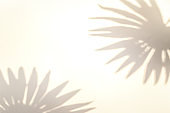 Shadow summer background. Plant leaf shadows on white wall in abstract tropical sunlight texture. Flat lay. Minimal sun light concept with palm tree leaf. Creative copy space.