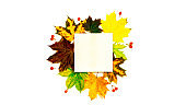 Leaf autumn. Colourful dried leaves, red berries in autumn composition isolated on white background. Template fall harvest thanksgiving halloween anniversary invitation cards.