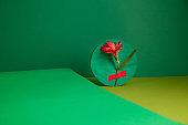 Composition of fresh Alstroemeria flower in green studio