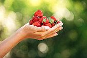 Beautiful female hands hold strawberries