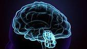 3d render of human body brain anatomy.