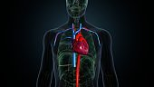 3d illustration of human body heart with arteries and veins