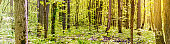 Spring forest with trees and green grass. Beautiful panoramic scenery