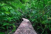 Concrete walking trail in a nature park.