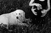 Black and white photo of Labrador lying in grass and his owners, pregnant couple holding children's shoes . Waiting for a child. An addition to the family. Funny moments.