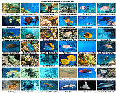 collage of underwater images. Collection of tropical fishes