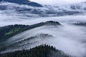 Landscape with high mountains. Foggy forest of the pine trees. Majestic summer day. The early morning mist. A place to relax in the Carpathian Park. Natural landscape. Free space for text.