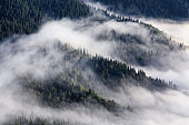 Amazing foggy autumn day. Landscape with high mountains. Forest of the pine trees. The early morning mist. Touristic place. Natural landscape. Free space for text.