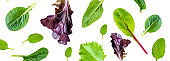 """Salad leaves Collection. Salad mix with rucola, frisee, radicchio, lettuce  Isolated on white background. Flat lay. Top view""""n"""