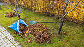 Beautiful view of fallen leaves in and rake on still green grass background. Autumn landscape. Fall season concept. Sweden.