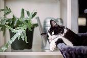 Domestic cat relaxing