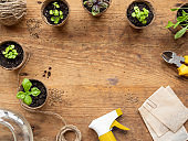 Basil seedlings in biodegradable pots on wooden table. Top view on green plants in peat pots and agricultural tools. Copy space.