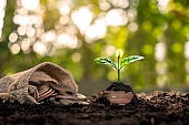 The tree is growing from the pile of money and money flowing out of pocket, money saving ideas and business growth, finance, investing.