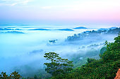 The morning scenery on the hillside in the misty