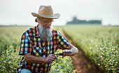 Gardening. Man working on plantation. Agriculture
