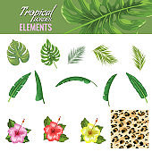 Tropical leaves and flowers set. Lion skin. Hand drawn leaves flat and solid color vector illustration.