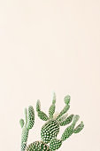 Closeup of cactus on beige background. Minimal neutral floral composition