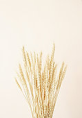 Close up of wheat spikes on beige background. Minimal neutral floral composition