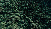 3d render image of aerial view of green forest