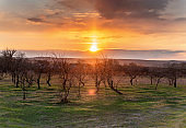 Beautiful blooming orchard at sunset. Spring background. Farming concept.