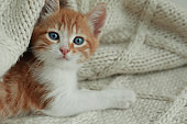 Cute kitten lying on knitted blanket, closeup. Space for text