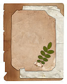 Old paper with dry plant, scratches and stains texture isolated
