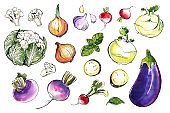 Vegetables and herbs in watercolor. Sketch food. Kitchen poster. Eggplant, onion, garlic, basil, radish