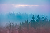 Silhouette of mountains in the early misty morning. View of the mountains in early spring. Beautiful nature landscape. Carpathian mountains