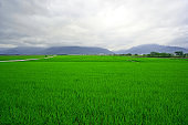 There is a big green rice field in front of the mountains.
