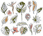Set of linear various flowers, monstera leaves and other leaves. Black and white art. Minimal outline silhouette.