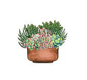 watercolor succulent plants composition, floral bouquet illustration, isolated on white background. Potted succulent