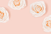 Pattern from pink white tender roses flower. Natural blooms. Nature background. Color trends.