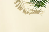 Summer minimal background with natural green palm leaves with sun shadows. Pastel colored aesthetic photo with palm plant.