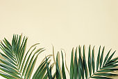 Natural green palm leaf with sun shade on light yellow. Summer minimal concept, beautiful daylight