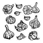 GARLIC Spicy Seasoning For Menu Food Vector Illustration Set