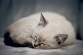 A small kitten is sleeping, curled up in a ball.