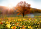 Colorful forest in sunlight. Autumn landscape with yellow trees and sun. Beautiful foliage in the park. Falling leaves natural background