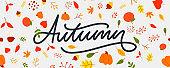 Autumn illustration, banner, vector, fall, lettering, card