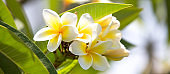 Tropical flowers in bloom summer background